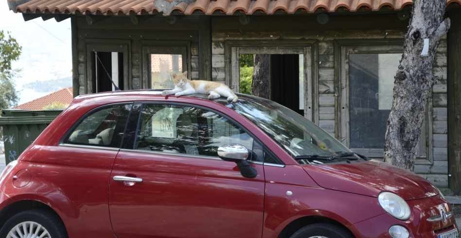 cat on roof of car at anakasia, pelion, greece