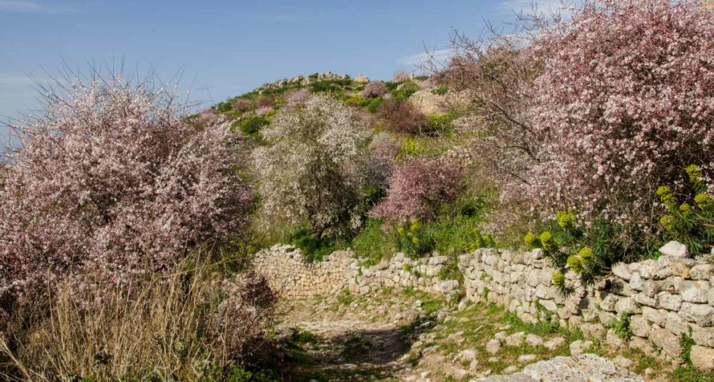 trees in bloom - acrocorinth