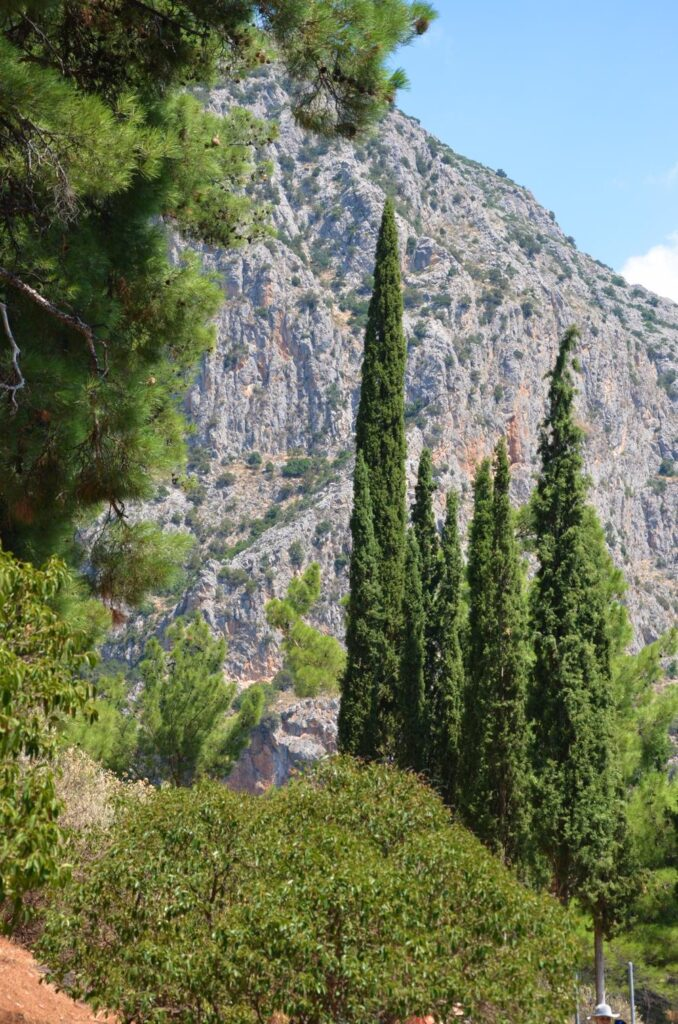 view of evergreen trees and high rock at delphi, greece